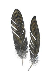 Feather Study 1 by Arnie Fisk