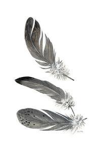 Feather Study 3 by Arnie Fisk