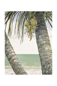 Seaside Coconuts by Arnie Fisk