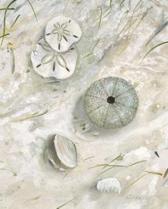 Seaside Urchin by Arnie Fisk