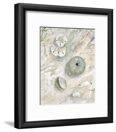 Seaside Urchin
