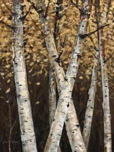 Shimmering Birches 1 by Arnie Fisk