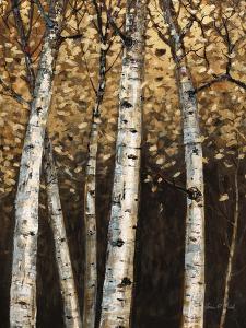 Shimmering Birches 2 by Arnie Fisk