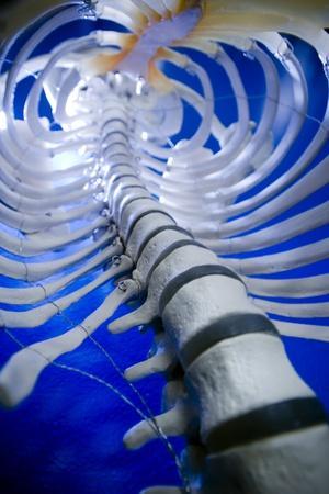 Human Spine Model