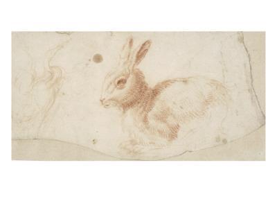 Etude de héron et de lapin