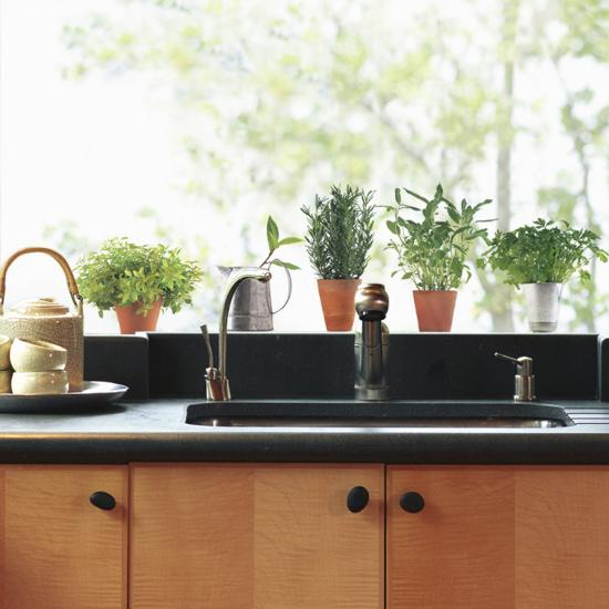 Aromatic Herbs Window Decal Sticker--Window Decal