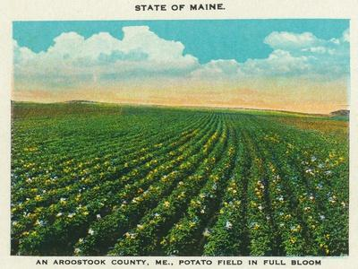 https://imgc.artprintimages.com/img/print/aroostook-county-maine-view-of-a-potato-field-in-full-bloom_u-l-q1gof2j0.jpg?p=0