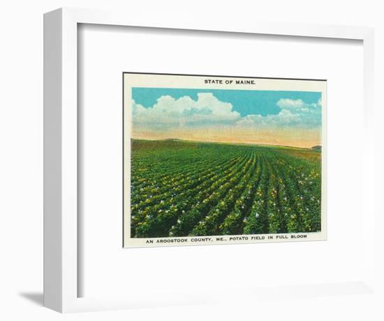 Aroostook County, Maine, View of a Potato Field in Full Bloom-Lantern Press-Framed Art Print