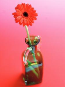 Arrangement of Beautiful Blossoming Gerbera Daisies