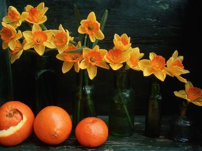Arrangement of Daffodils and Oranges-Michelle Garrett-Photographic Print