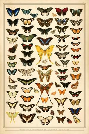 https://imgc.artprintimages.com/img/print/array-of-butterflies-and-moths_u-l-q1g8m5n0.jpg?p=0