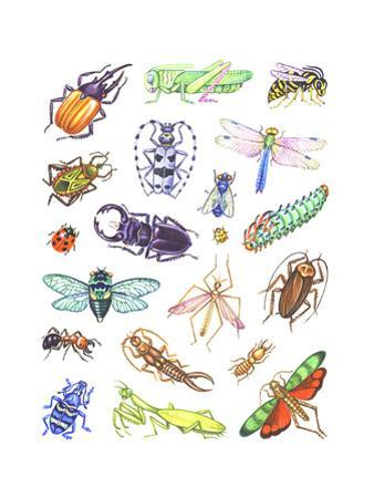 Array of Insects, Including Beetles, Grasshoppers, and Caterpillars