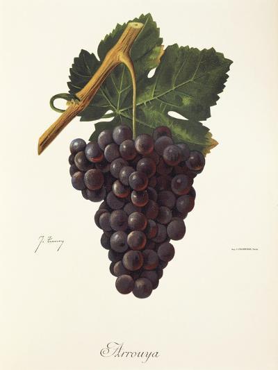 Arrouya Grape-J. Troncy-Giclee Print
