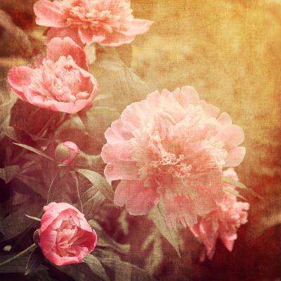 Art Floral Vintage Background with Pink Peonies-Irina QQQ-Art Print