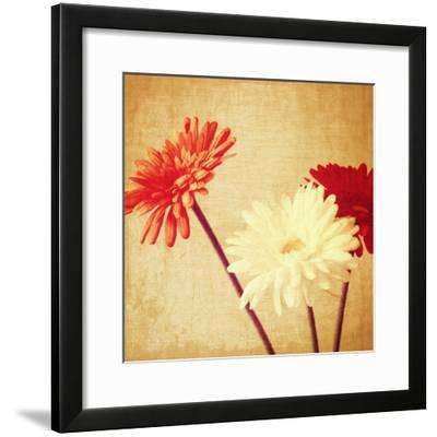 Art Floral Vintage Background with Red and White Gerbera in Sepia-Irina QQQ-Framed Premium Giclee Print