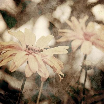 https://imgc.artprintimages.com/img/print/art-floral-vintage-sepia-background-with-light-yellow-chamomiles_u-l-pofb0k0.jpg?p=0