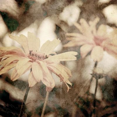 Art Floral Vintage Sepia Background with Light Yellow Chamomiles-Irina QQQ-Art Print