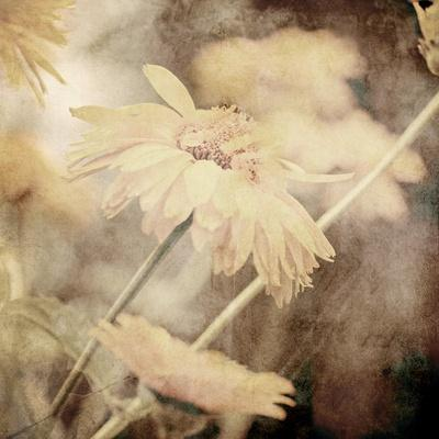 https://imgc.artprintimages.com/img/print/art-floral-vintage-sepia-background-with-light-yellow-chamomiles_u-l-pofb1c0.jpg?p=0