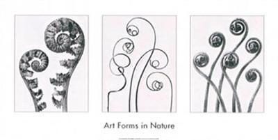 Art Forms in Nature I-Karl Blossfeldt-Art Print