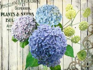 Farm Seed Hydrangeas by Art Licensing Studio