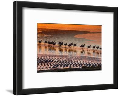 Altiplano, Bolivia, Eduardo Abaroa Andean Fauna National Reserve, Laguna Colorada, flamingos