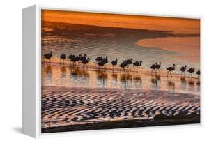 Altiplano, Bolivia, Eduardo Abaroa Andean Fauna National Reserve, Laguna Colorada, flamingos by Art Wolfe