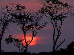 Amazonia Sunset by Art Wolfe