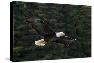 Bald Eagle, Glacier Bay National Park and Preserve, Alaska, USA by Art Wolfe