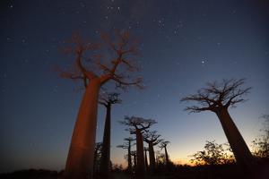 Baobob Tree, Madagascar by Art Wolfe