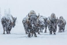 Altiplano, Bolivia, Salar de Uyuni-Art Wolfe-Photographic Print