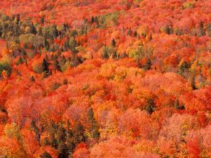 Fall Colors, Northwoods, Minnesota, USA by Art Wolfe
