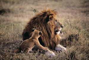 Father Knows Best by Art Wolfe