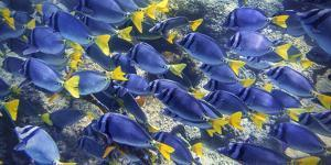 Galapagos Fish by Art Wolfe
