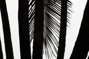 Hawaii by Art Wolfe