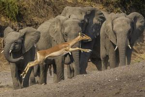 Impala and African elephants, Mashatu Reserve, Botswana by Art Wolfe
