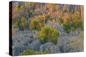 Limestone formations, Tsingy de Bemaraha Strict Nature Reserve, Madagascar by Art Wolfe