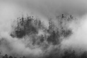 Misty forest, Paro Valley, Bhutan by Art Wolfe