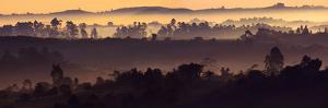 Misty Hills by Art Wolfe