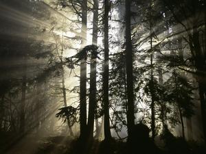 Morning Has Broken by Art Wolfe