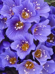 Purple Flowers by Art Wolfe