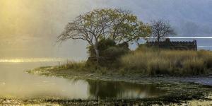 Ranthambore India by Art Wolfe