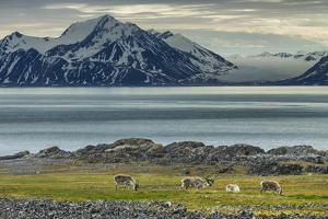 Reindeer in Svalbard,Norway by Art Wolfe