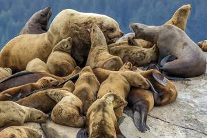 Steller sea lions, Glacier Bay National Park and Preserve, Alaska by Art Wolfe