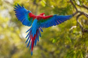 The Parrot by Art Wolfe