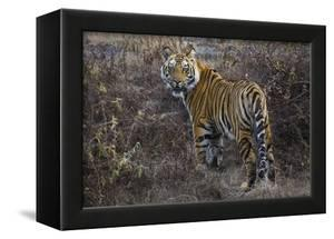 Tiger, Bandhavgarh National Park, India by Art Wolfe