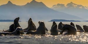 Glacier Bay National Park, Alaska by Art Wolfe Wolfe