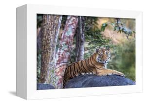 Indian tiger, Madya Pradesh, India by Art Wolfe Wolfe
