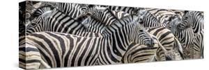 Zebras at waterhole, Namibia, Africa by Art Wolfe Wolfe