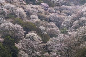 Yoshino Japan 2 by Art Wolfe