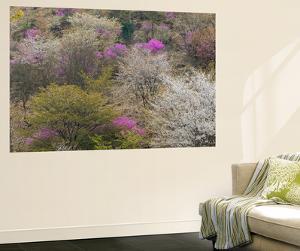 Yoshino Japan 3 by Art Wolfe